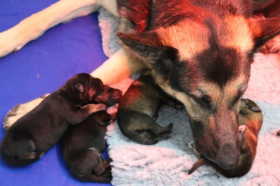 nelly and pups.jpg